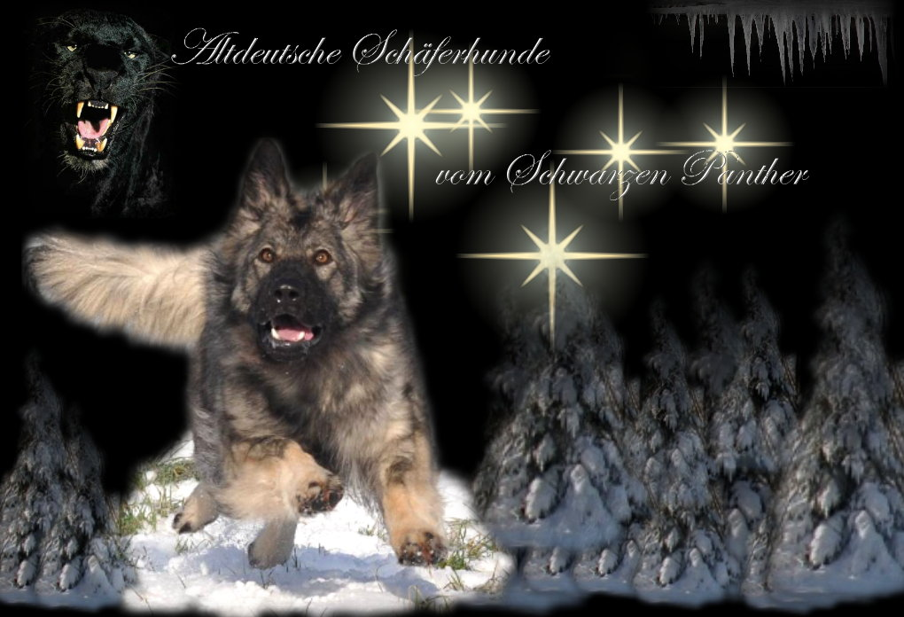 Vom Schwarzen Panther Altdeutsche Schaferhunde